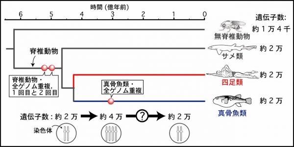Figure1JAP