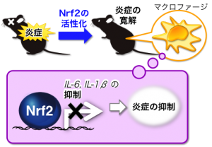 ID15568_fig_kobayashi